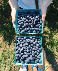 Berry Picking and Pie Making